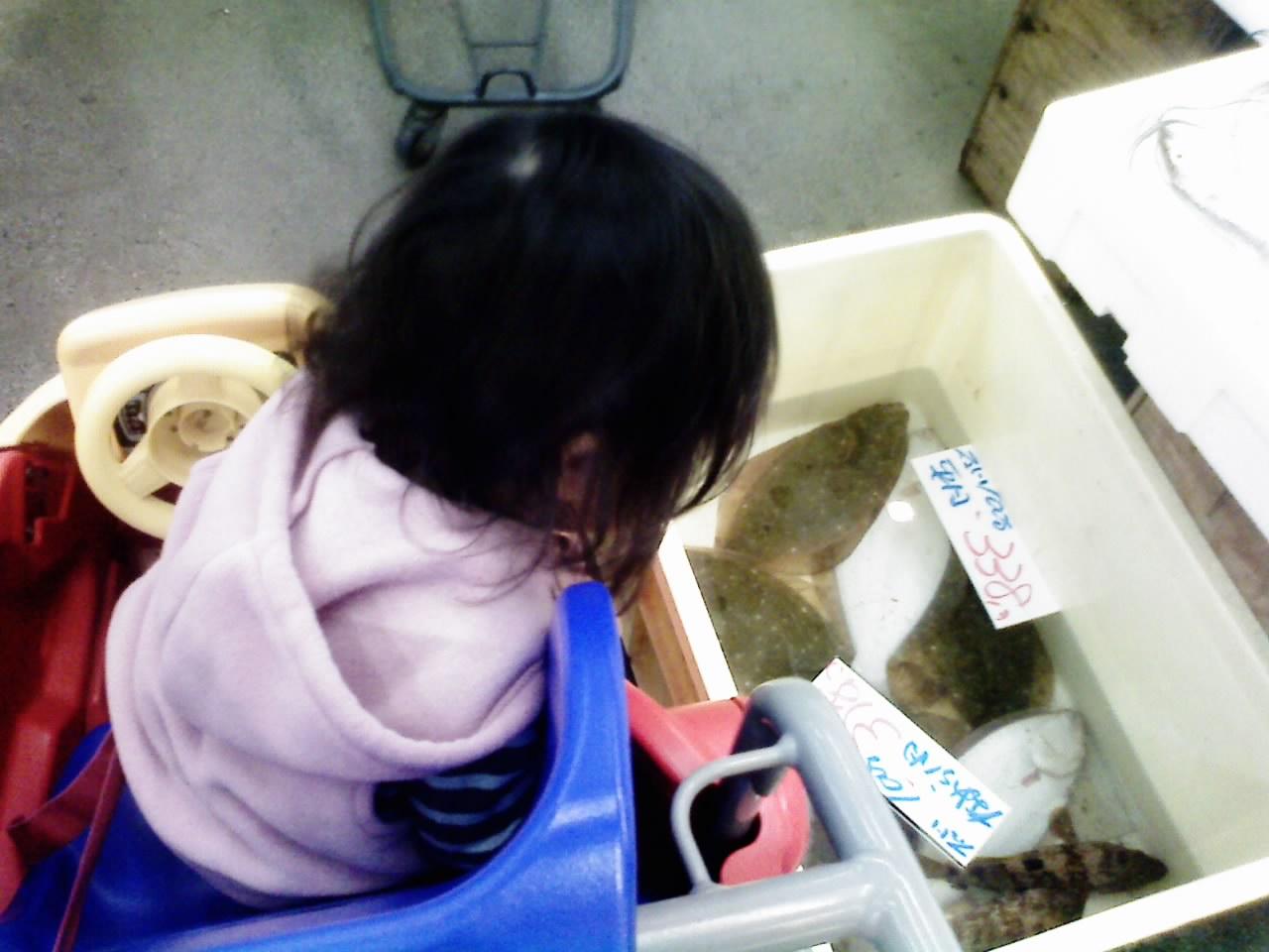 魚見る幼児