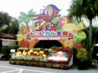 沖縄フルーツランドに寄ってみた。中はフルーツの木や花が見られるんだけど、シーズンオフなんだろうかやや寂しい感じ。ドラゴンフルーツ畑があったけど実がないとただのサボテン園だった。
